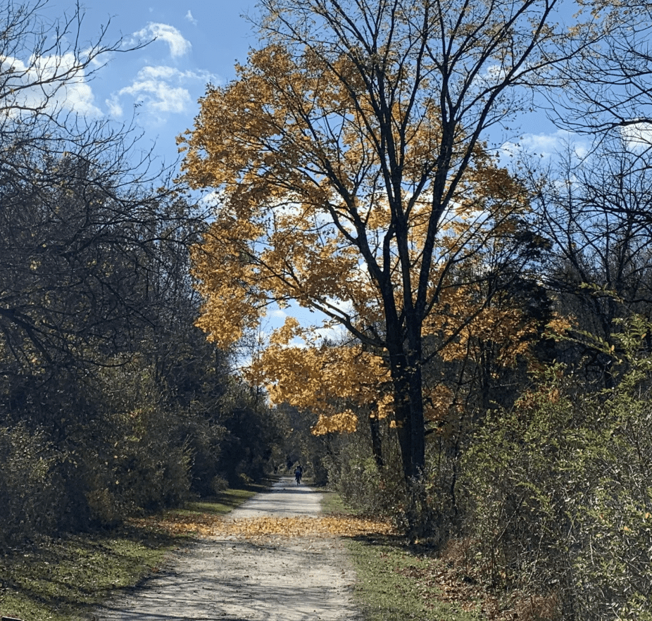 gravel trail with trees alongside it